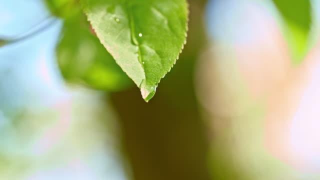 SLO Missouri, gouttes de pluie sur les feuilles