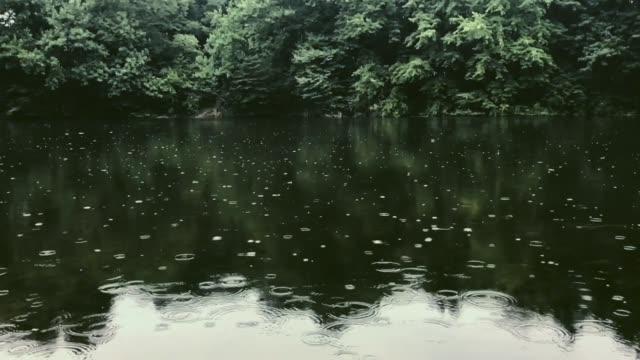 regentropfen tropfen langsam auf das feuchtgebiet - see stock-videos und b-roll-filmmaterial