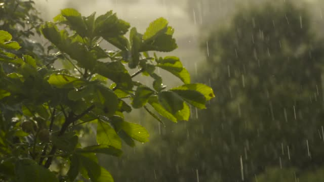 Raindrops fall on leaves, slow motion