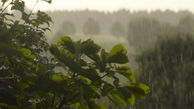 stockvideo's en b-roll-footage met regendruppels vallen op bladeren, slow motion - zeitlupe