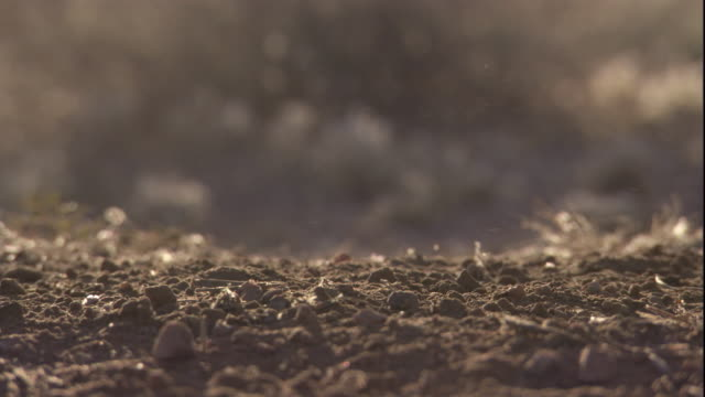 Raindrops fall onto Sonoran desert soil, Arizona, USA. Available in HD.