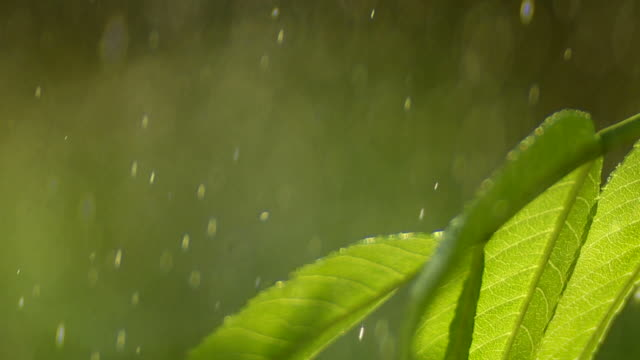 hd raindrops falling on leaf closeup. - frische stock videos & royalty-free footage