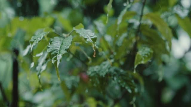 vídeos de stock, filmes e b-roll de raindrops folhas caindo em close-up - devagar