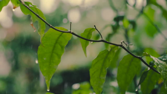 raindrops falling on leaves close-up - pioggia video stock e b–roll