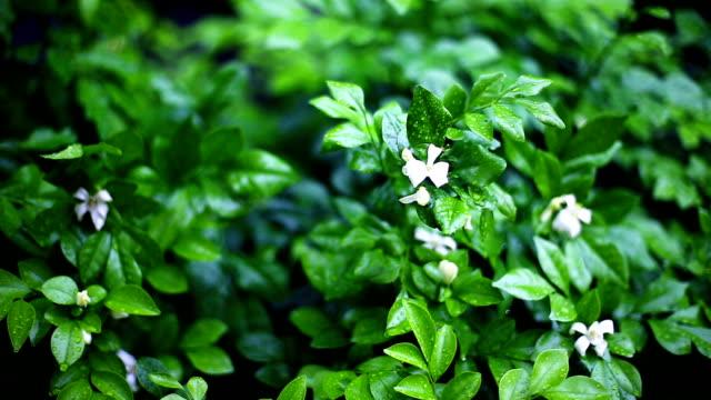 Regentropfen fallen auf Natur Blätter