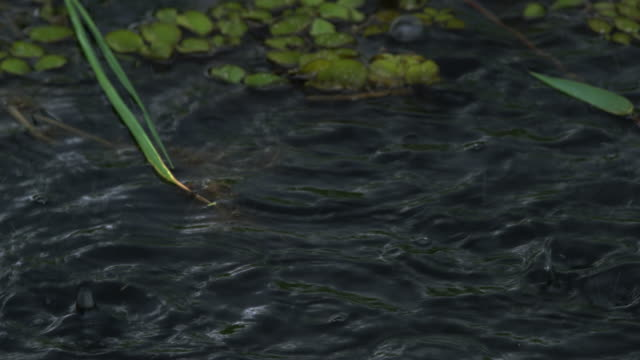 stockvideo's en b-roll-footage met raindrops falling on plants / sudd swamps, south sudan, africa - stortregen