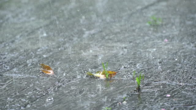 vidéos et rushes de raindrops falling on the ground.slow motion water drop on the ground. - végétation tropicale