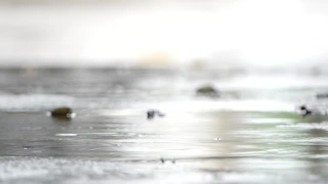 vídeos de stock, filmes e b-roll de chuva - nível da superfície