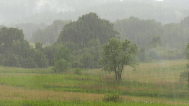 rainfall on rural tree landscape - pioggia video stock e b–roll