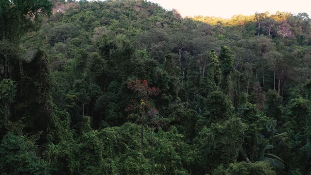 rainforest aerial view - biodiversity stock videos & royalty-free footage