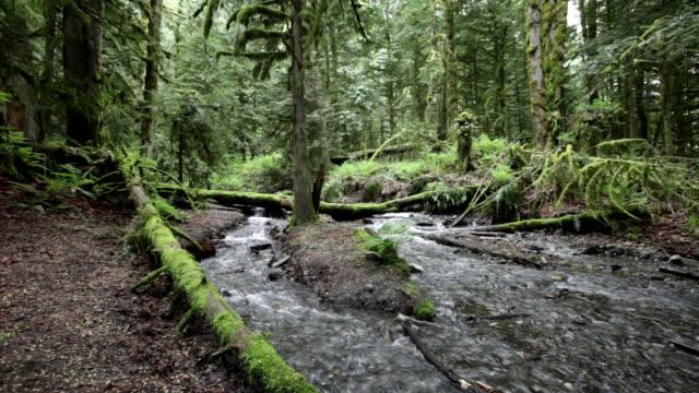 Rainforest and creek