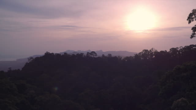Rainforest canopy reveal at sunset in the hills of Langkawi Island of Malaysia
