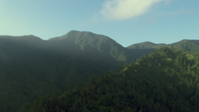stockvideo's en b-roll-footage met a rainforest covers the blue mountains in jamaica. - jamaica