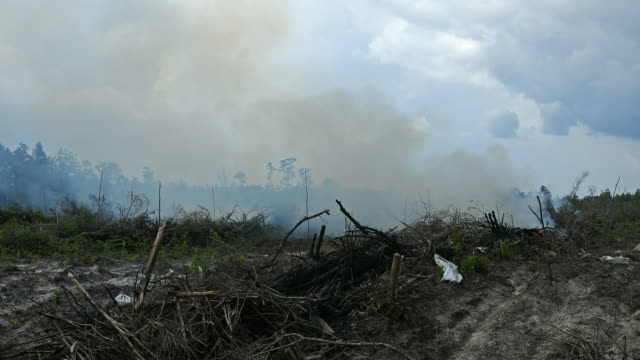 rainforest destruction for palm oil plantation in indonesia - indonesia video stock e b–roll