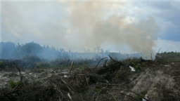 Rainforest destruction for palm oil plantation in Indonesia