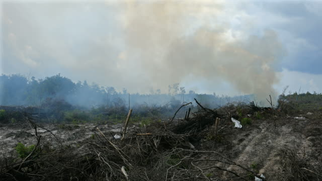 rainforest destruction for palm oil plantation in indonesia - fire natural phenomenon video stock e b–roll