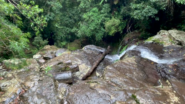 rainforest during rain shower at the top of a waterfall in lamington national park australia - rainforest stock videos & royalty-free footage