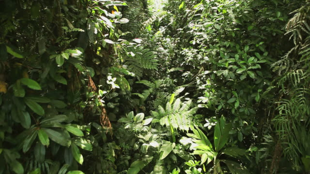 stockvideo's en b-roll-footage met rainforest hd - tropisch regenwoud