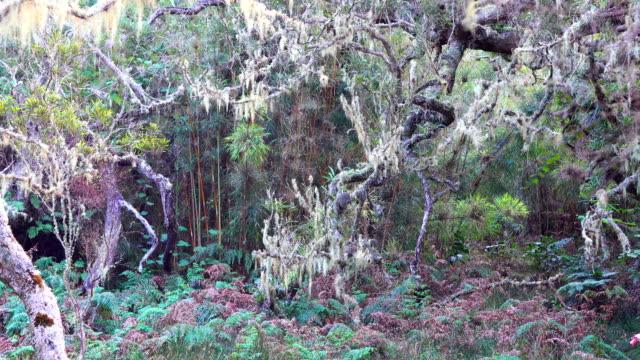 rainforest in reunion island - mafate cirque stock videos & royalty-free footage