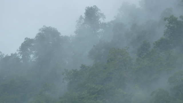 foresta pluviale nel fiume salween - bigfoot video stock e b–roll