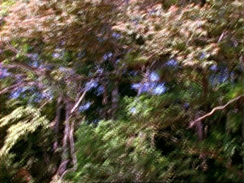 rainforest layers, crane shot of canopy to understorey, trees, epiphytes etc, panama, central america - kraneinstellung stock-videos und b-roll-filmmaterial