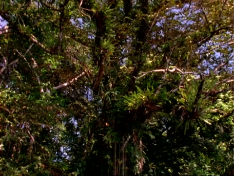 rainforest layers, crane shot of canopy to understorey, trees, epiphytes etc, panama, central america - crane shot stock videos & royalty-free footage