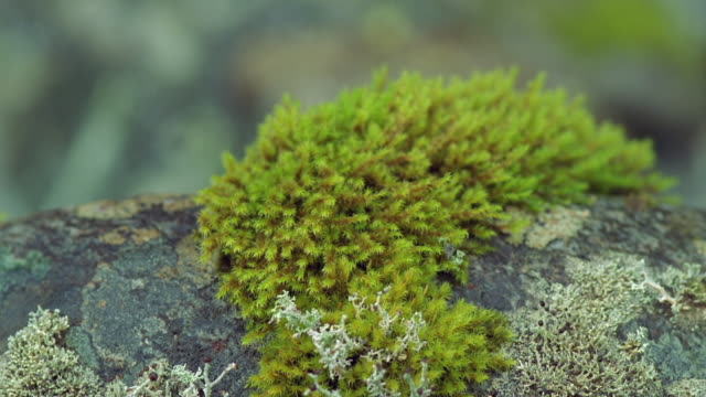 cu, td, rainforest moss, fiordland national park, south island, new zealand - moos stock-videos und b-roll-filmmaterial