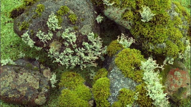 CU, Rainforest moss, Fiordland National Park, South Island, New Zealand