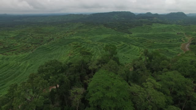 Rainforest next to large deforested, palm oil plantation, reveal