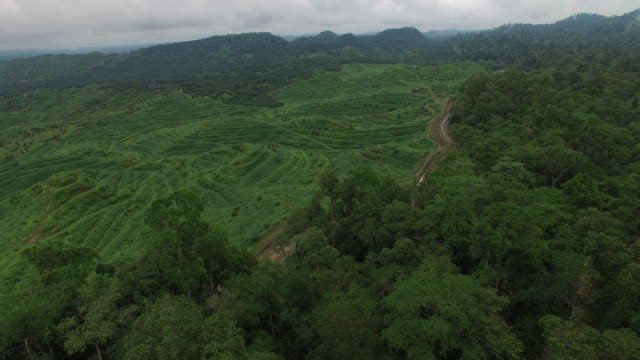stockvideo's en b-roll-footage met rainforest next to large deforested, palm oil plantation, reveal - onverharde weg