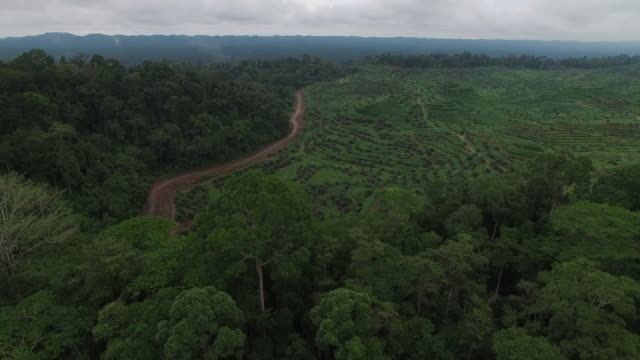 rainforest next to large deforested, palm oil plantation, reveal - borneo stock-videos und b-roll-filmmaterial