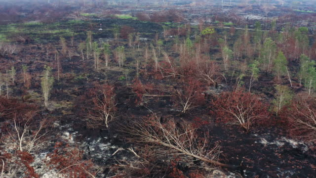 rainforest of indonesia burnt down by criminal slash and burn - cenere video stock e b–roll