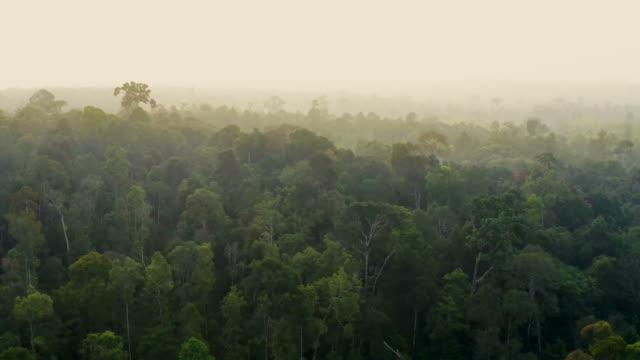 インドネシアのボルネオ・カリマンタン島の熱帯雨林 - ボルネオ島点の映像素材/bロール