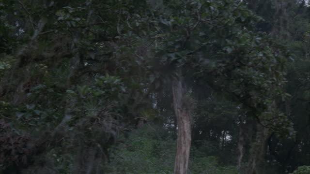 ms, pan, rainforest, panama - epiphyte stock videos & royalty-free footage