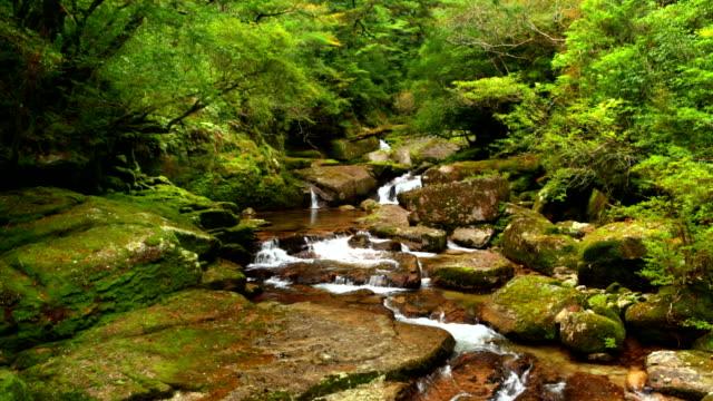 Rainforest river on Yakushima Island, Japan