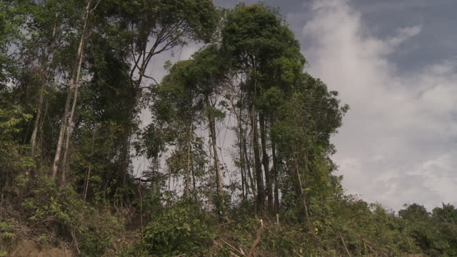 rainforest tree felling in borneo - zerstörung stock-videos und b-roll-filmmaterial