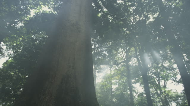 rainforest tree - malaysia stock videos & royalty-free footage