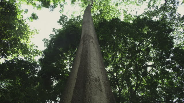 rainforest tree - tree trunk stock videos & royalty-free footage