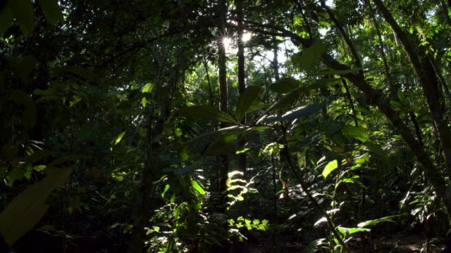 vídeos de stock, filmes e b-roll de rainforest understory, starburst sunshine peaking through, 4k right slide - tambopata