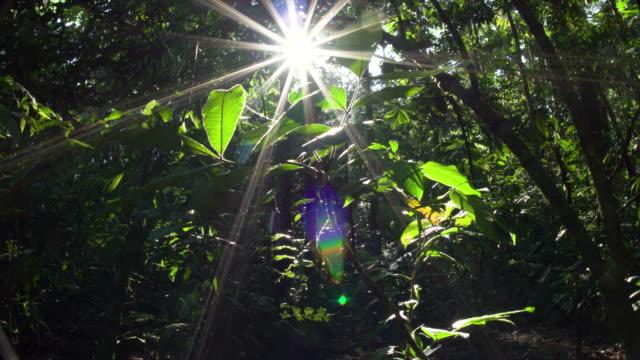 vídeos de stock, filmes e b-roll de rainforest understory, starburst sunshine, rear dolly 4k - tambopata