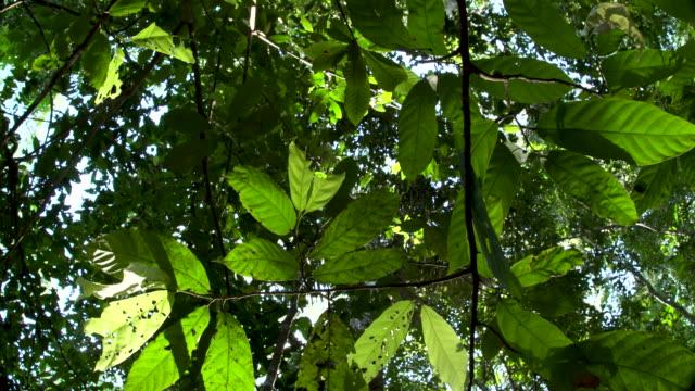 vídeos de stock, filmes e b-roll de rainforest understory--leaves in foreground, left slide 4k - tambopata