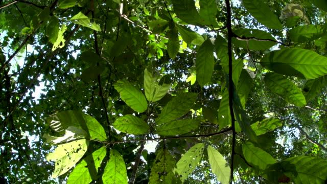vídeos de stock, filmes e b-roll de rainforest understory--leaves in foreground, right slide 4k - tambopata