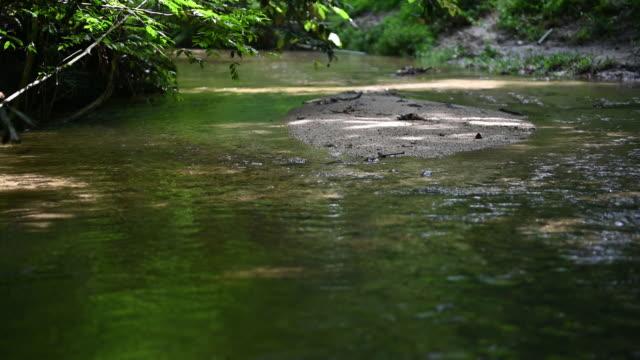 川の水が流れる熱帯雨林 - 熱帯の木点の映像素材/bロール