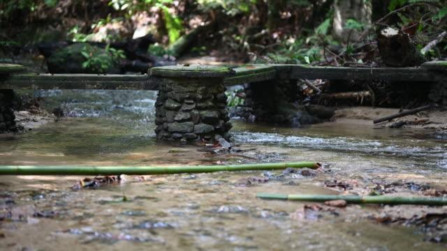 石橋で流れる川水を流れる熱帯雨林 - 熱帯の木点の映像素材/bロール