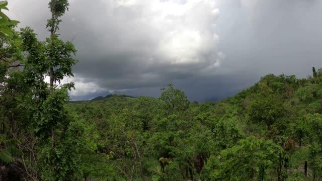 vídeos de stock, filmes e b-roll de floresta tropical com nuvens de tempestade e chuva - forma da água