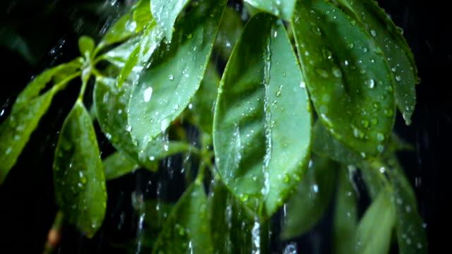 raining falling green leaves - torrential rain stock videos & royalty-free footage