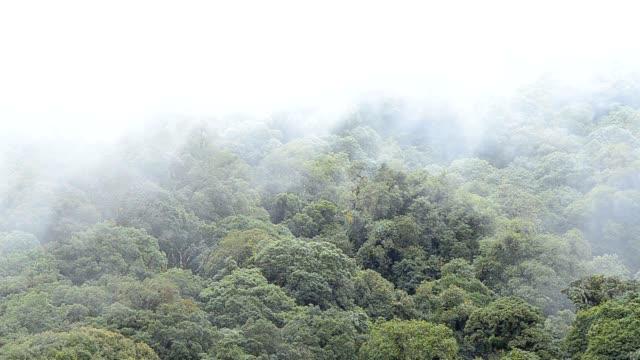 raining forest in fog on thailand - mythology stock videos & royalty-free footage