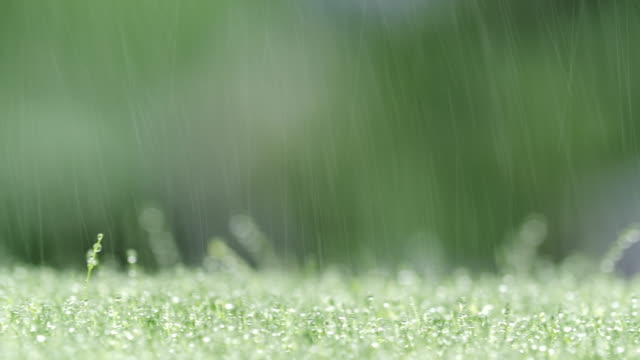 raining green grass background - lawn stock videos & royalty-free footage