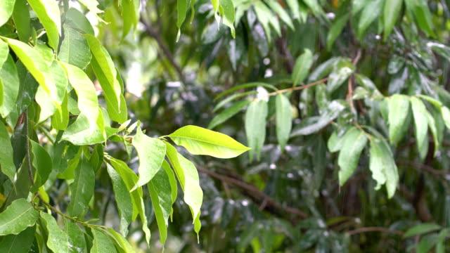 vídeos de stock, filmes e b-roll de chovendo na floresta tropical - processo vegetal