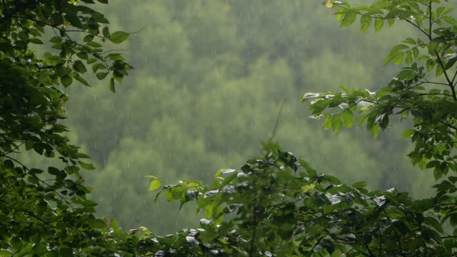 raining in woodland - khingan nature reserve - woodland stock videos & royalty-free footage